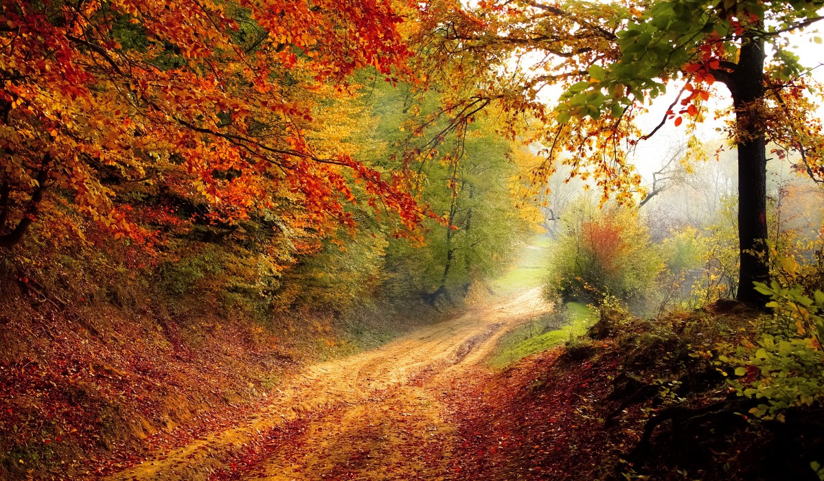 road_forest_season_autumn_fall_landscape_nature_forest_landscape-839463